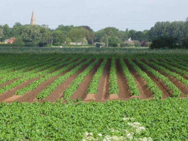 I love the geometry of these newly planted potato fields